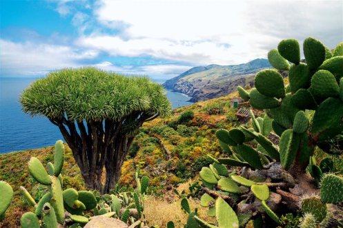 Vista costa norte de La Palma